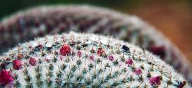 حبات المطر| شتاء قصرة 2012