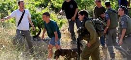 اعتداء المستوطنين وجنود الاحتلال على المزارعين والمتضامنين الأجانب في اليانون