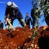 """صور من زراعة الأشجار في القرية """"ضمن مشروع تخضير فلسطين"""""""